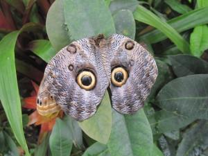 butterflyIMG_1761