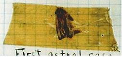 bug-sellotape